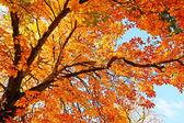 Mooie, zonnige herfst in het park — Stockfoto