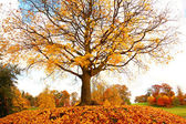 Beautiful, autumnal maple tree on the hill — 图库照片