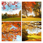 Beautiful, sunny autumn in the park, collage — Stock Photo