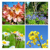 Springtime collage of fresh flowers — Stock Photo