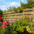 Beautiful garden with roses — Stockfoto