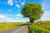Rural road in the countryside — Stock Photo