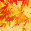 Old, autumnal dreamy, brown background -  