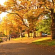 Wonderful autumnal scene in the park of Falkirk, Scotland - Stock Photo
