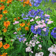 Foto de Stock  : Beautiful blue Alium and mixed garden flowers