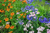 Beautiful blue Alium and mixed garden flowers — Stok fotoğraf