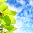 Stock Photo: Beautiful Spring leaves background