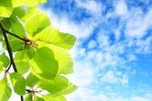 Beautiful Spring leaves background — Stock Photo