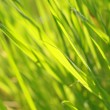 Spring grass background — Stock fotografie