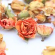 Beautiful dry roses — ストック写真