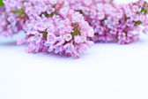 Beautiful lilac background — Stock Photo