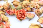 Beautiful dry roses — Stock fotografie