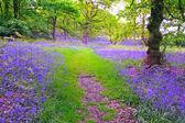 Vackra blåklockor skog — Stockfoto