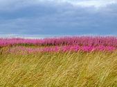 Beautiful meadow of pink wildflowers — Stock Photo