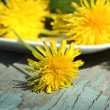 Fresh dandelion flowers — Foto Stock