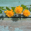 Pretty wooden background with yellow flowers — Стоковая фотография