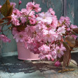 Beautiful japanes cherry flowers in the vase — Stok fotoğraf