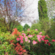 Beautiful spring garden — Stock Photo