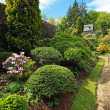 Stock Photo: Beautiful spring garden with buxus