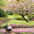 Beautiful Spring with cherry tree and wooden bench — Stok Fotoğraf #26222001
