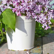 Beautiful , soft lilac in a white vase — Foto Stock
