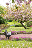 Beautiful Spring with cherry tree and wooden bench — Foto de Stock