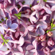 Springtime lilac background, close up — Stock Photo