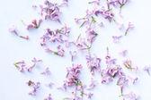 Springtime lilac background, close up — Stock Photo