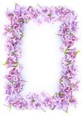 Pretty romantic lilac frame — Stock Photo