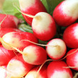 Fresh ripe radish closeup — 图库照片