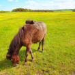 Two horses in the Spring meadow — Foto Stock