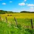 Two horses in the Spring meadow — Stockfoto