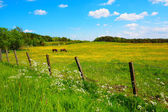 Dois cavalos no prado primavera — Foto Stock