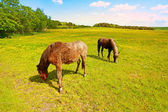 Two horses in the fields — Stock Photo