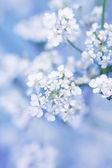 Spring blossom  — Photo