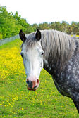 Beautiful white horse — Stockfoto