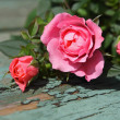 Romantic pink roses background — Stock Photo #28902195