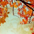 Stock Photo: Orange chestnut leaves grungy background