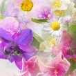 Beautiful summwer flowers background — Stock Photo