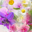 Beautiful summwer flowers background — Stock fotografie