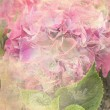 Beautiful hydrangeflower background — Zdjęcie stockowe #29323419