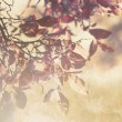 Beautiful grunge autumnal background — Foto Stock