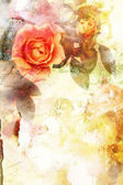 Romantic orange roses background — Photo