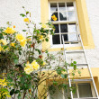 Yellow roses and white house — Stock Photo