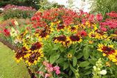 Monarda Didyma, Bee balm flowers — Stock Photo
