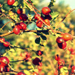 Stock Photo: Hawthorn berries background
