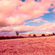 Stock Photo: Dreamy fields of wheat