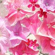Beautiful, floral pink, background — Stock Photo #42836319