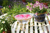 Rosa bella, floreale, sfondo — Foto Stock