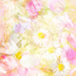 Pretty daisies artistic background — Stock Photo #43999511
